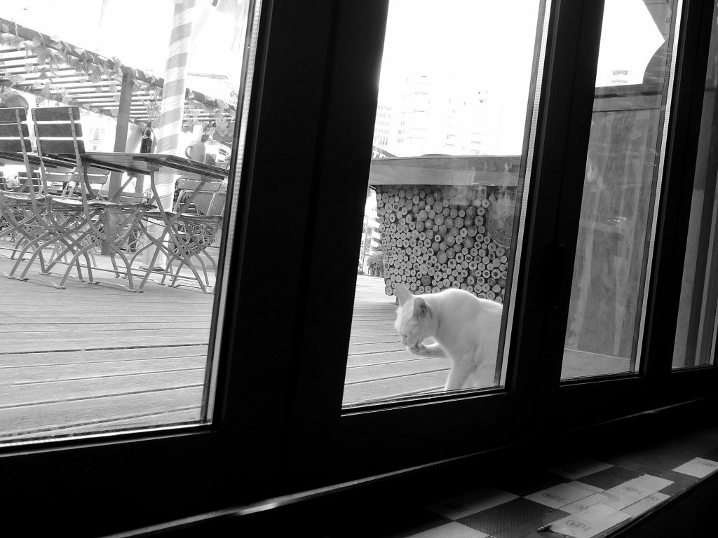 Katzen und kleinere Tiere können Bewegungsmelder oft täuschen, doch nicht die Produkte von ALMAS INDUSTRIES.   Foto von John Lee von Pexels